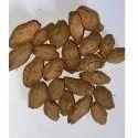 Melia Dubia Seed