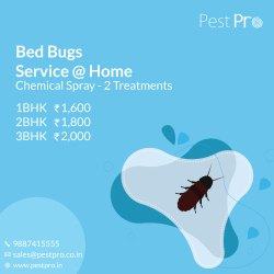 Bed Bugs Pest Control Bed Bugs Control In Bengaluru