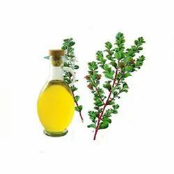 Organic Betulina Oil