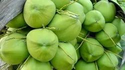 A Grade Solid Tender Coconut, Packaging Size: 2 Kg, Coconut Size: Large