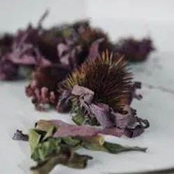 Echniciea Flower - Echinacea Purpurea