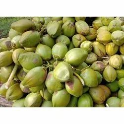Solid B Grade Tender Coconut, Packaging Size: 50 Kg