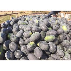 A Grade Black Fresh Watermelon, Packaging Type: Gunny Bag, Packaging Size: 10 Kg