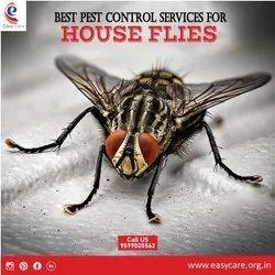 Flies Control Services