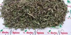 Sweat Basil Leaves  Ocimum basilicum  Ram Tulsi