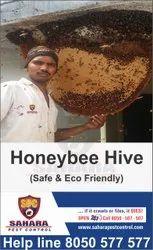 Home Spray honey bee hive removal service