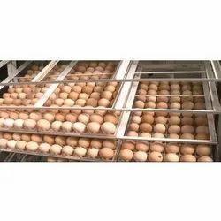 13 Kg Brown Vanaraja Hatching Eggs, Packaging Type: Carton Box