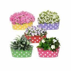 CII-884 Plastic Flower Pots