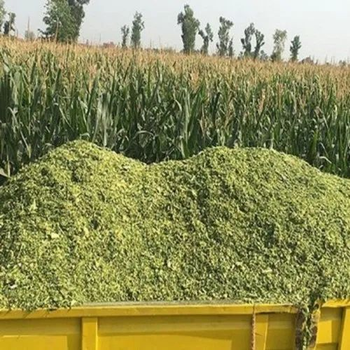 Corn Silage Cattle Feed at Rs 5/kilogram   Corn Silage   ID: 19091316012