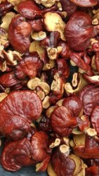 Ganoderma Red Mushroom