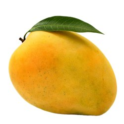 Yellow Organic Alphonso Mango, Carton