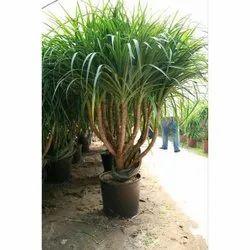 Gardens Plant Nursery Services