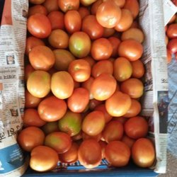 A Grade Red Tomato