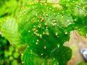 Pesticides Viricides