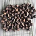 Moringa Oleifera Seed