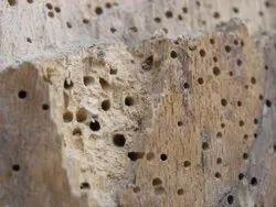 Wood Borer Treatment Service