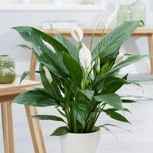 Green Plastic Artificial Plant