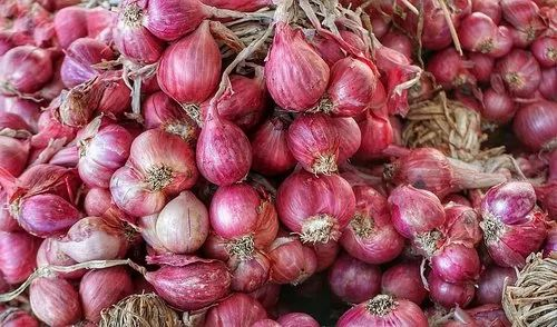 A Grade Tamil Nadu Fresh Shallot Onion, Packaging Size: 50 Kg, Onion Size Available: Small