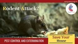 Chemical Treatment Rodent Control Services, Pan India