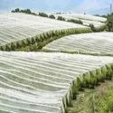 Agriculture Spunbond Sss Nonwovens Fabric