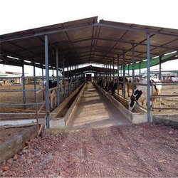Modular Steel Dairy Shed