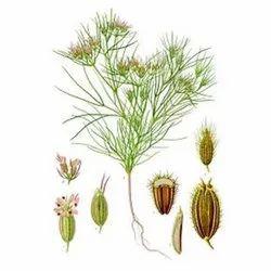 Cumin Seed, 1 kg, Packaging Type: PP Bag