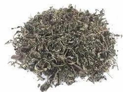 Artemisia Leaf - Artemisia Annua - Majtarimastaru - Artemisia Indica