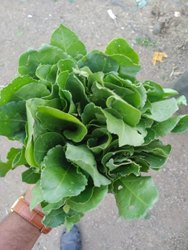 A Grade Fresh Green Spinach, Bunch, 300 Grams