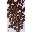 Cassia Siamea Kashid Seeds