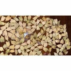 Cassia Angustifolia  senna Seed