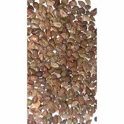 Cassia Auriculata Seeds