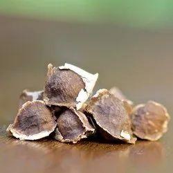 Moringa oleifera Is Very Nutritious