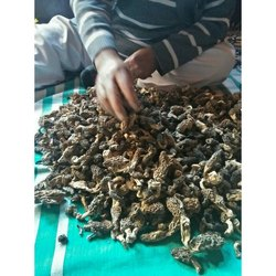 Alamdar Kashmiri Gucci Mushrooms, Packaging Size: 1 Kg