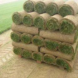 GIGS Natural Grass Carpet