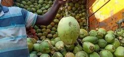 Solid Whole Tender Coconut A Grade, Packaging Size: 20 Piece, Coconut Size: Large