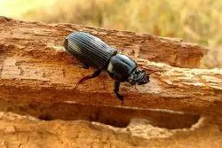 Wood Borer Treatment Service