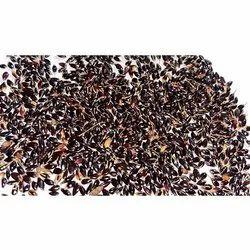 Cofs 31 Seeds