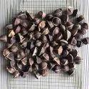 Moringa Seeds - Organic Moringa Seed