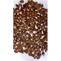 Subabul Seeds