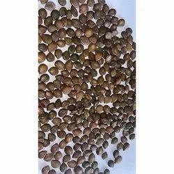 Cassia arculata Seeds