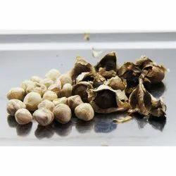 Moringa Oleifera Seed  Kernels