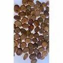 Albizia Lebbeck Seeds