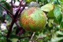 MaxEEma Bio Bactericide Plant Protection Range