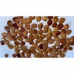 Gliricidia Seed
