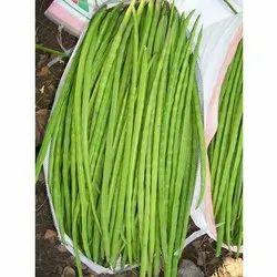 A Grade Green Fresh Drumstick, Packaging Size: 7 Kg