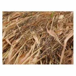 Hybrid Sudan Grass Seed, Packaging Type: Pp Bag, Packaging Size: 1 Kg