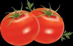 Natural Green Hybrid Tomato Seed, Packaging Type: 10gram