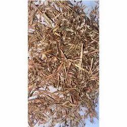Cimbobium Martini Wild Kaashi Grass Seed