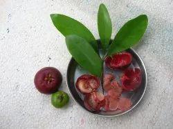 Garcinia indica (Kokum)