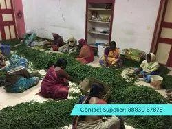 GL A Grade FRESH GREEN CHILLI, Maharashtra, Packaging Size: 4.5 Kg gross